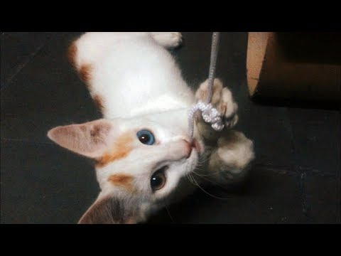 Funny CATS & KITTENS Baby Vidéos Compilation 03