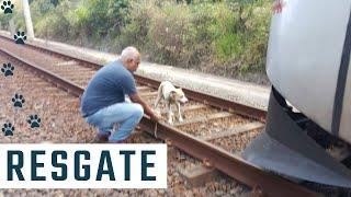 Cachorro amarrado nos trilhos do metrô é resgatado por maquinista