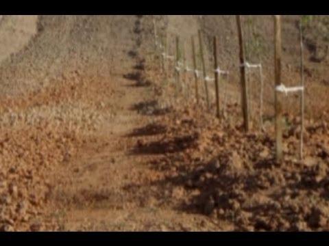 Ceviz Yetiştiricilği - Cevizde Toprak Hazırlığı, Bahçe Düzeni ve Sırta Dikim 6. Bölüm