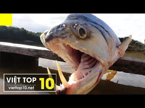 Top 15 Loài Động Vật Có Hàm Răng Đáng Sợ Nhất Hành Tinh