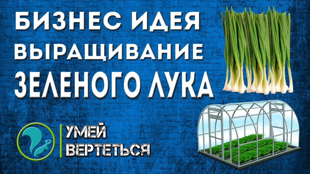 Бизнес план выращивания зеленого лука 5