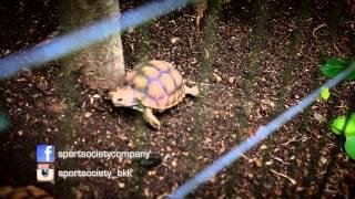 Petsociety - Sulcata Ep.2-3