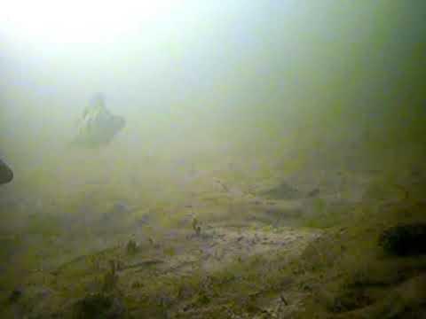 окунь на балансир подводная съемка