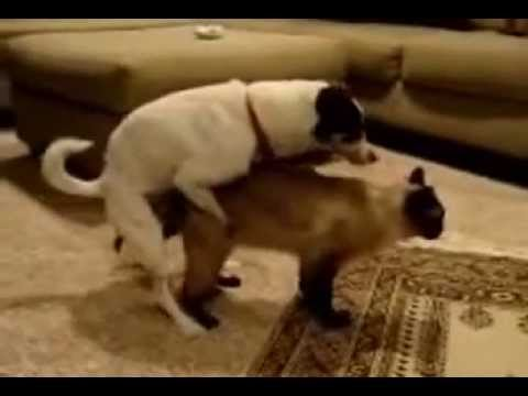 Dog Sexing a Cat - Bing images
