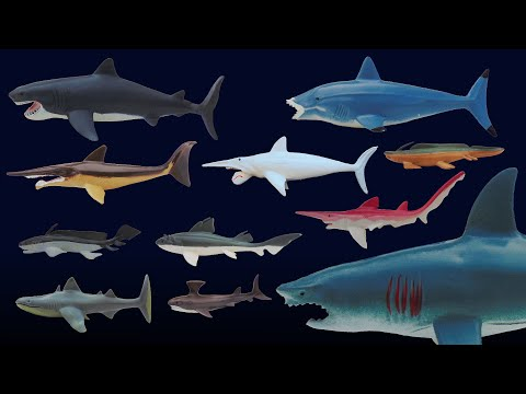 Prehistoric Sharks - Featuring Megalodon - The Kids' Picture Show (Fun & Educational Learning Video)
