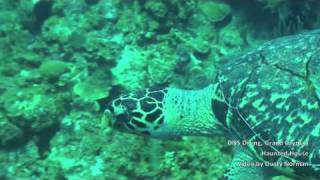 DNS Diving, Grand Cayman,Haunted House