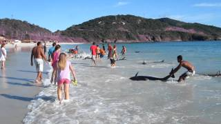Beachgoers Rescue Stranded Dolphins in Brazil