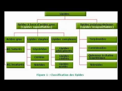 Glucides, Lipides et Acide nucléique