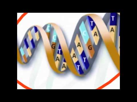 chromosomes genes and alleles relationship trust