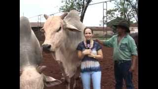 Toro asusta a presentadora de tv