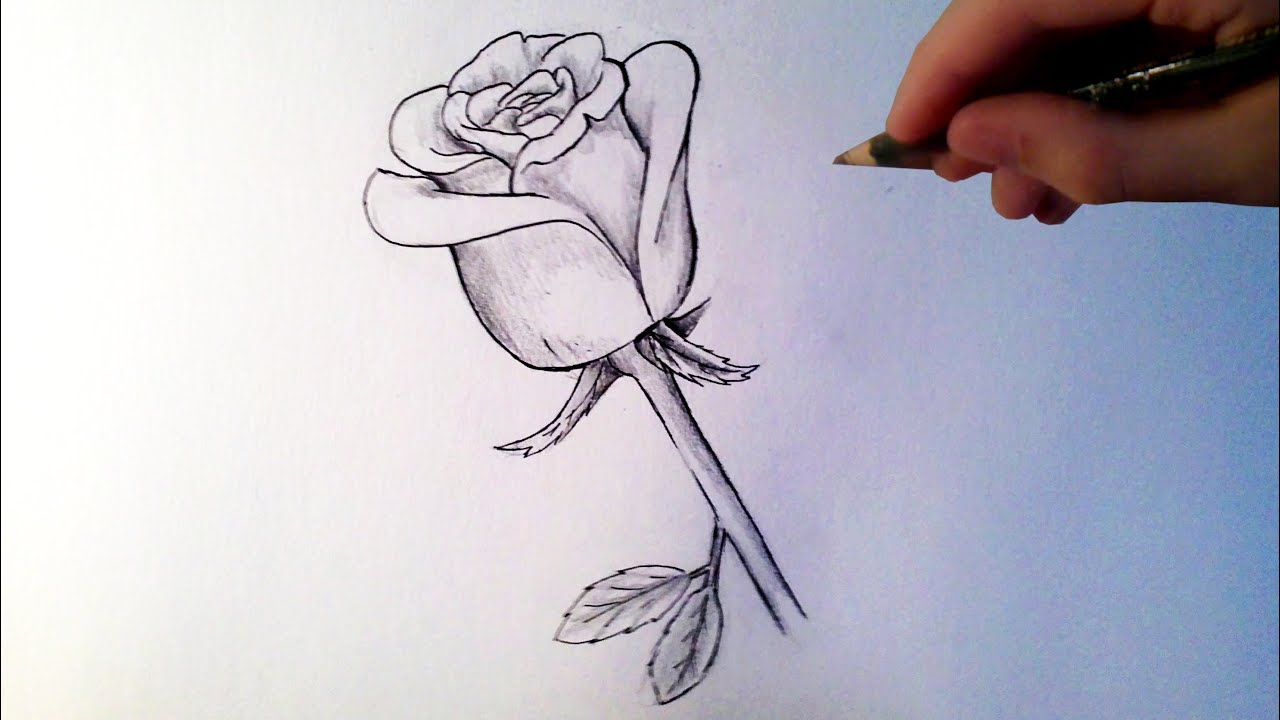 Comment dessiner une rose tutoriel youtube - Photo de fleur a dessiner ...