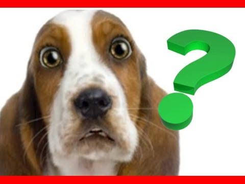 Puppy Dog Training Basics - YouTube