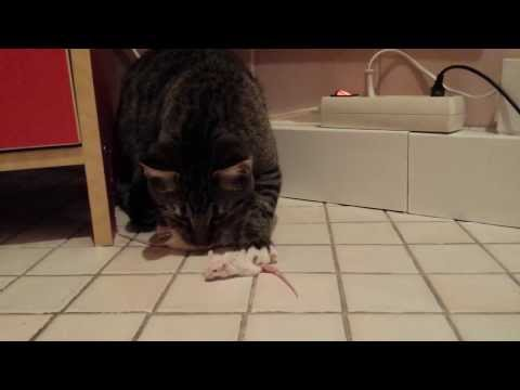 Kater und Maus Kluftinger catch two mice