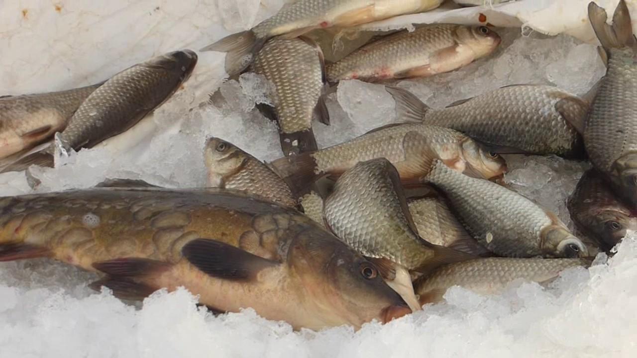 отчеты по рыбалке морозовка