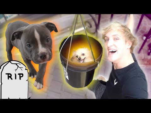 100FOOT PUPPY ZIP LINE **Rip Arya**