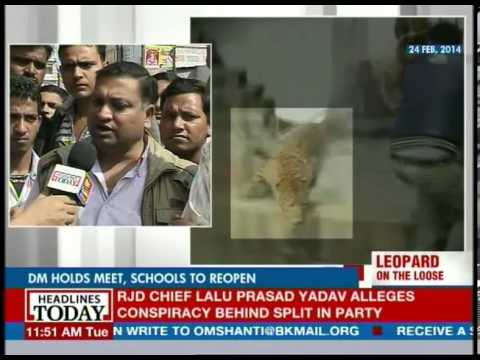 Meerut: Leopard seen on jewellery shop CCTV