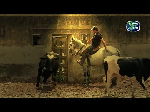 LANÇAMENTO DVD   Correção de Cavalos de Vaquejada