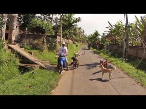 Street Feeders - Bali Animal Welfare Association