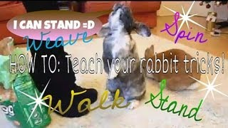 HOW TO: Teach Your Rabbit Tricks {{up, Turn, Weave & Walk