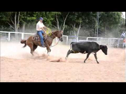 Nevada Tari LFA égua Quarto de Milha a venda no N1 Cavalos