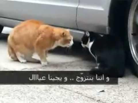 طوشة قطط عجيبة موت ضحك  تحشيش