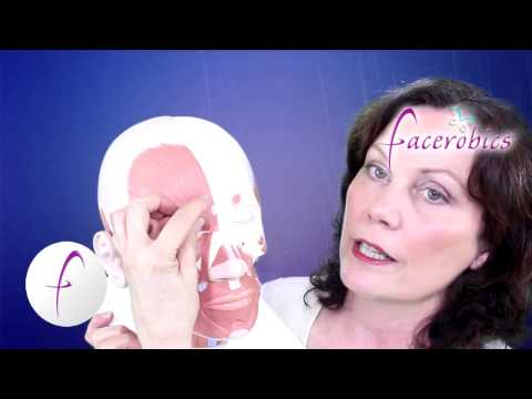 Facial Exercise Forehead Muscle Exercise to Smooth Forehead Wrinkles Series 5 | Facerobics