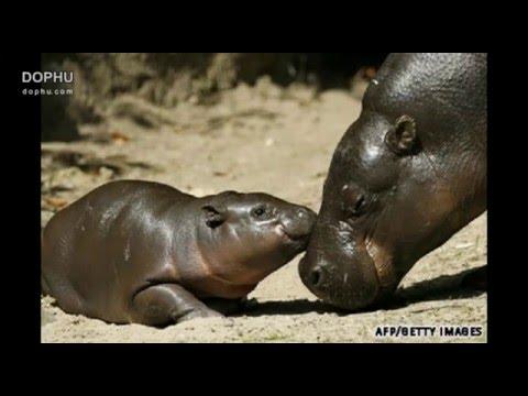 Những hình ảnh vui nhộn nhất thế giới về động vật