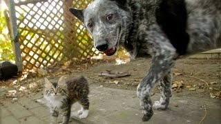 "[Be Ready To ""Aww"" Over This Dog And His Disabled Kitten Buddy] Video"