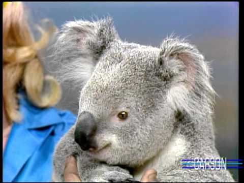 Cute Koala Climbs a Tree on Johnny Carson's Tonight Show with Joan Embery