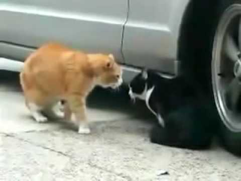This Cat Betrayed His Girlfriend