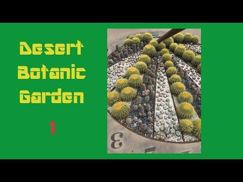 沙漠植物园1 那里的多肉实在大的惊人