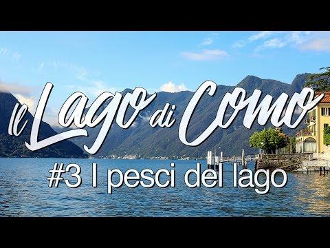 Il Lago di Como #3 - I pesci del Lago
