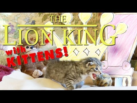 The Lion King (Cute Kitten Version)