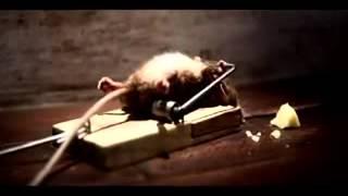 La super ratita