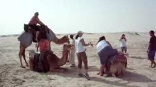 Qatar Camel Ride
