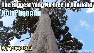 Video of Trees in Thailand