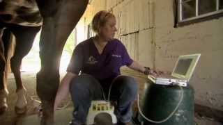 picture of Equine Veterinarian