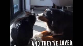 Perros adorables