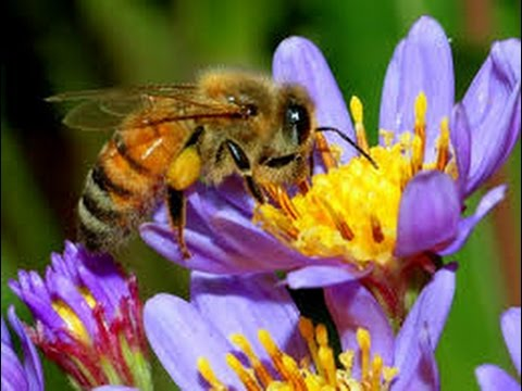 Handy Beekeeping Tips for Spring Honey Bee Management