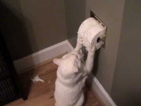 Cat Eats Toilet Paper