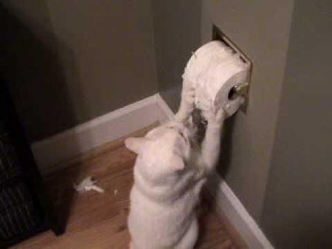 Cat Eats Toilet Paper
