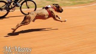 Carrera de perro vs ciclista