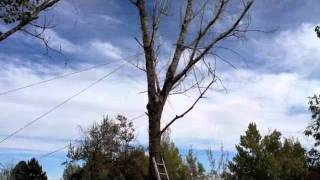 Tree Felling Gone Bad