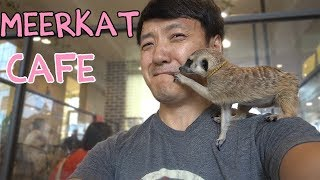 ADORABLE Meerkat & Raccoon Cafe in Seoul South Korea