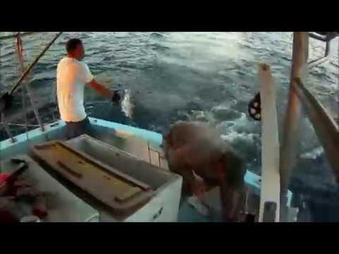 Commercial fishing crushing the mackerel