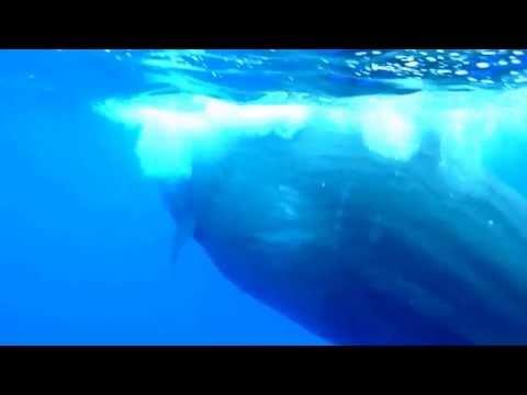 Whales Orca Killer Shark Sperm Collection