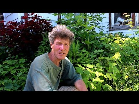 Pruning a Pre-Bonsai Garden June 2014