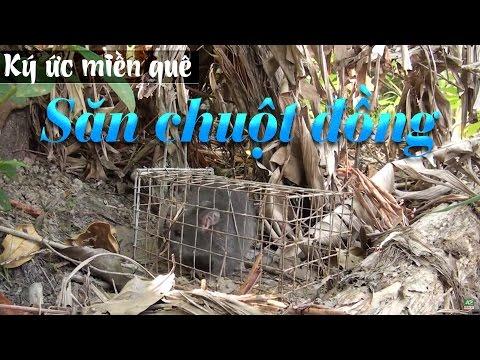 Ký ức miền quê | Săn chuột đồng | THKG