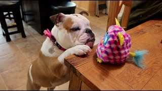 Introducing My Dog To The Haunted Furby!
