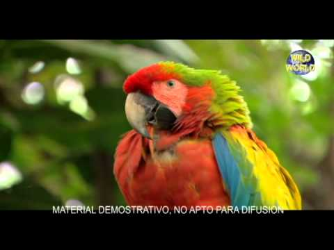 Samsung Galaxy S 2 - Papagayo.avi
